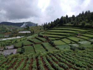 Pemandangan ladang warga via Dieng