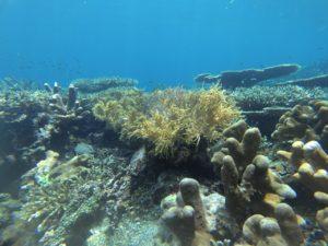 bawah laut pantai jikomalamo