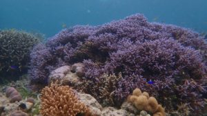 Bawah Laut Kei